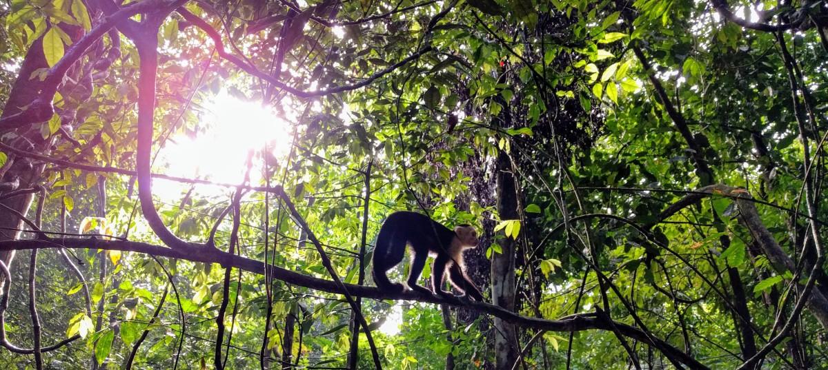 Punctual Primates